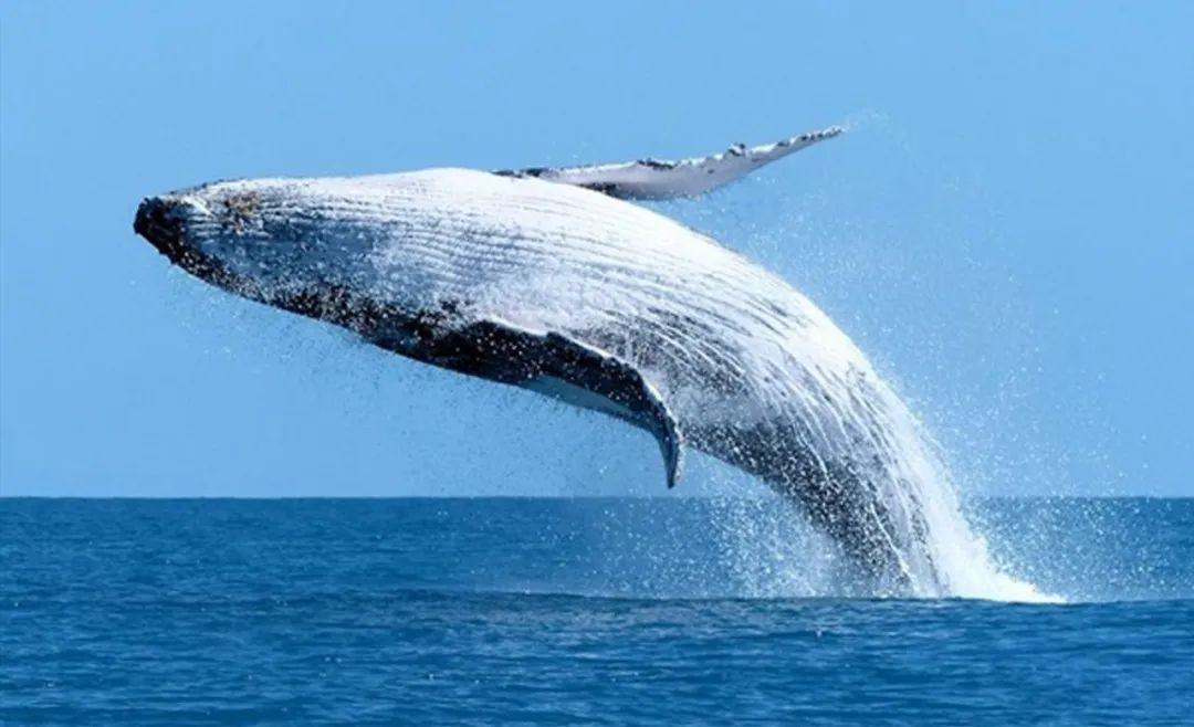 Compound—巨鲸的游戏,散户上钩?